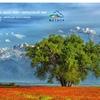Veter Kazakhstan