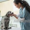 Ветеринарная клиника Амнис