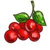 Все про ягоды - от А до Я