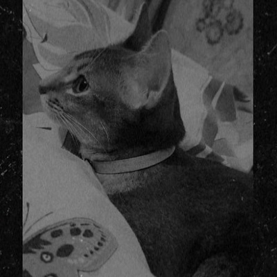 Котик Марсик