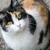 Кошки Алматы