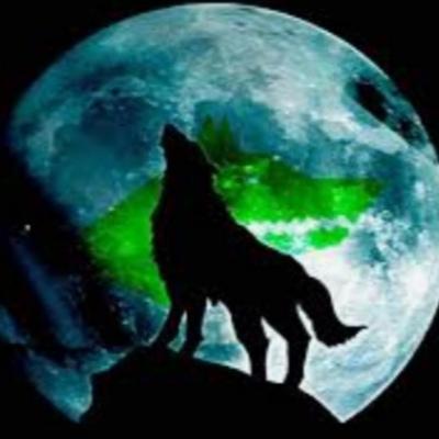 Volenok Dog
