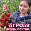 Питомник растений Агрофирма Виктория Малинник.ру