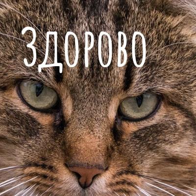 Никита Баширов-С