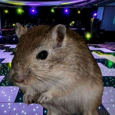 Мышь-Песчанка Эксклюзивный, Санкт-Петербург