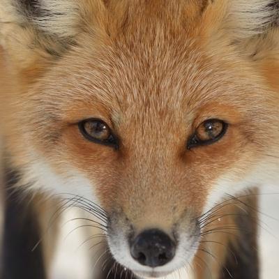 Fox Foxyz, Якутск